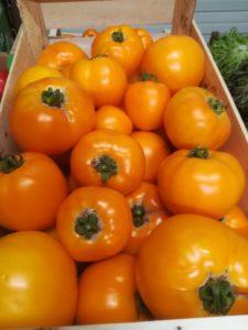 tomates jaunes 2018 2